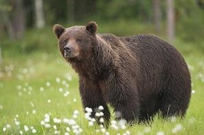 Bear Watching, night trip