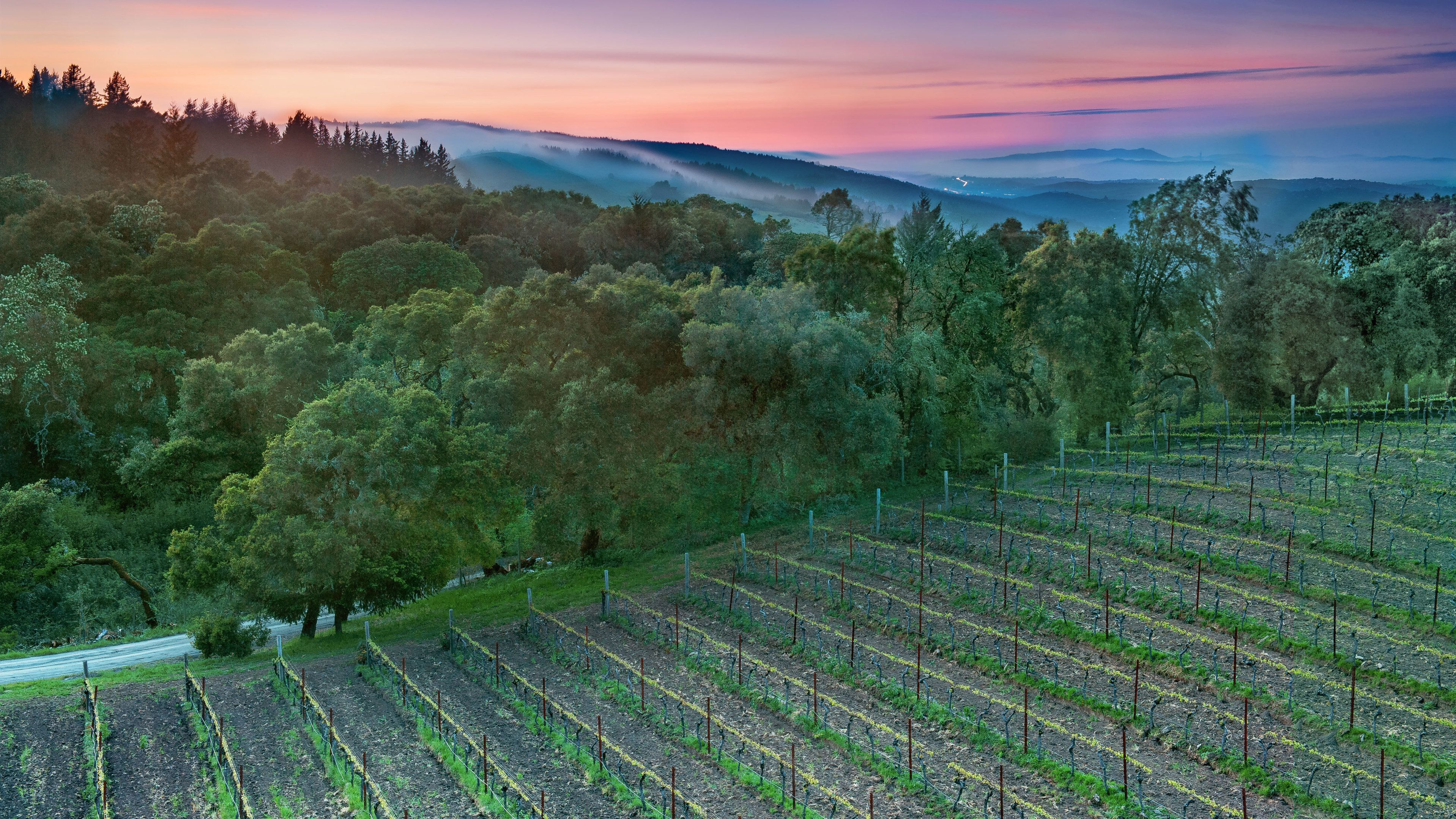 Panoramic view of the vineyards in Sonoma at sunset