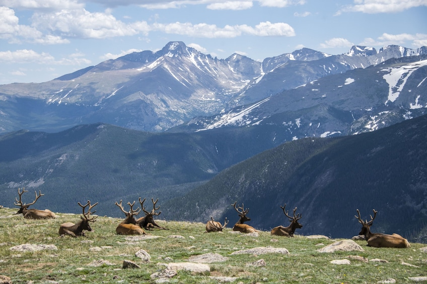 Show item 3 of 9. Rocky Mountain National Park Full-Day Tour