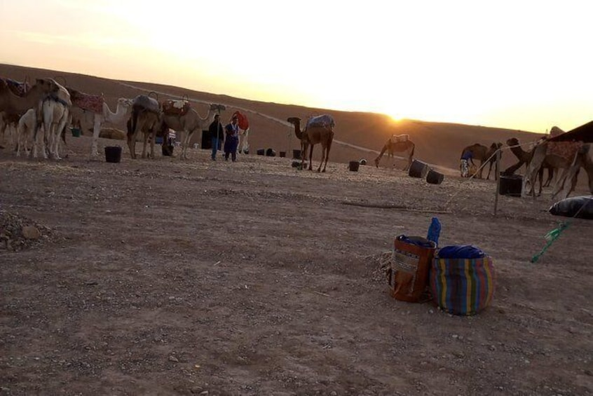 Show item 10 of 10. 3 unforgettable days from Marrakech to Merzouga (Sahara Desert).