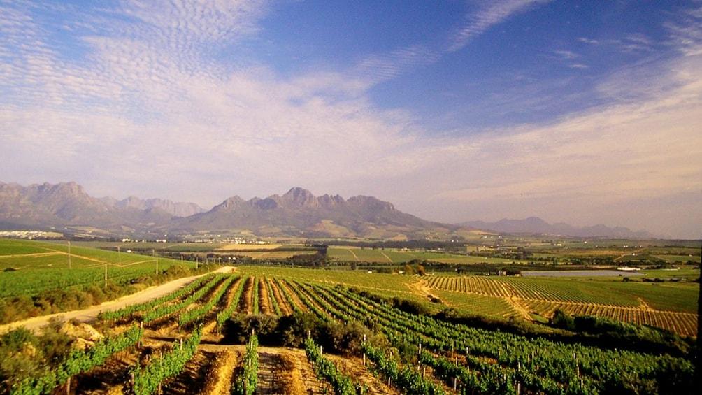 Show item 2 of 9. Stellenbosch vineyard landscape