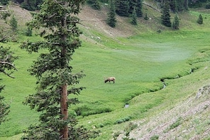 Private and Personalized Three Hour Morning Tour of Rocky Mountain National...