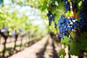 Luxury All Day Wine Tour including Lunch