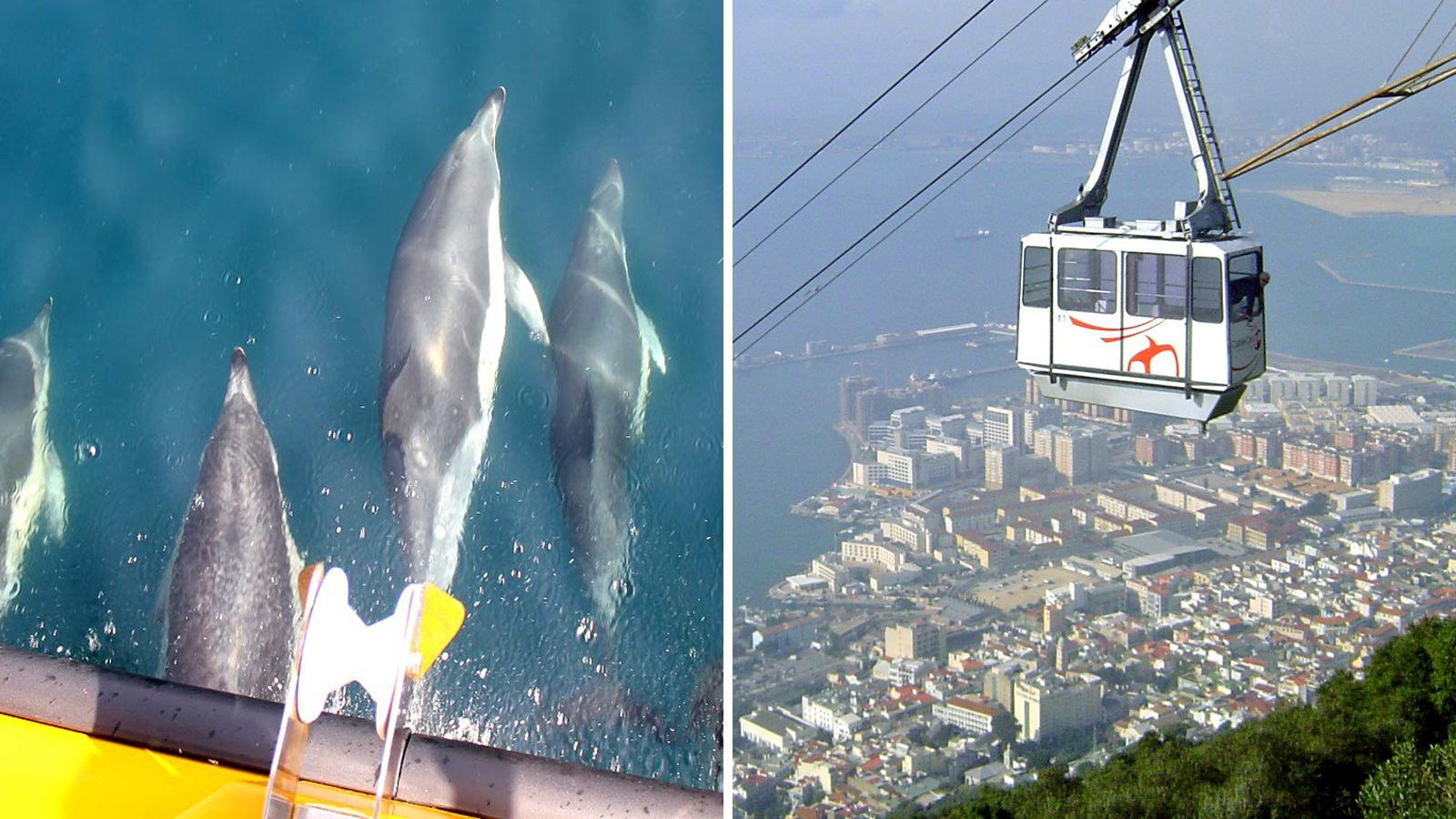 Split image showing dolphins swimming under the bow of a boat and an aerial cable car high above the city in Gibraltar