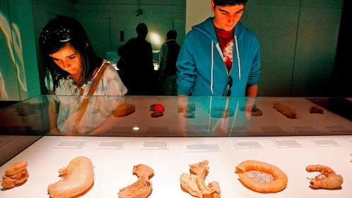 Learning about internal organs at the Body Exhibit in Atlanta