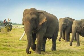 Private: Elephants, Animals & Bird watch Jeep Safari at Minneriya National ...