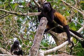 Wildlife Trekking Chiriquí