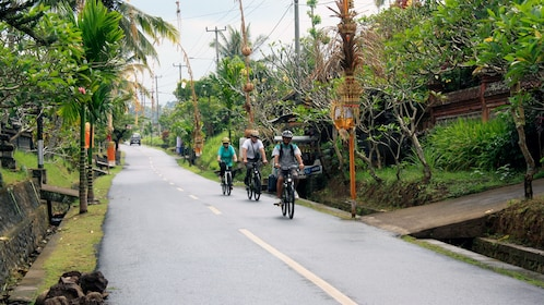 Bicycling group on a tree-lined road in Bali