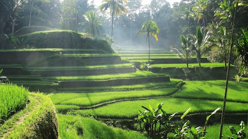 Layers of rice paddies in Bali