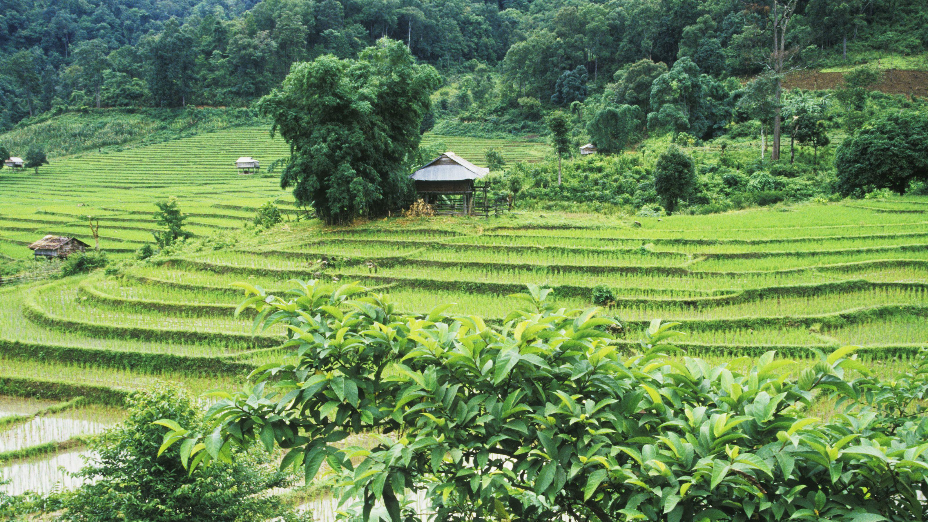 Kiehtova retki Ubudiin