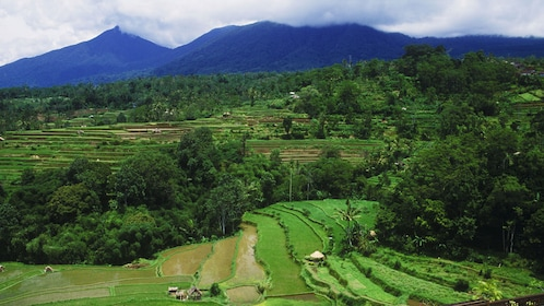 Stepped rice paddies in the landscape of Bali