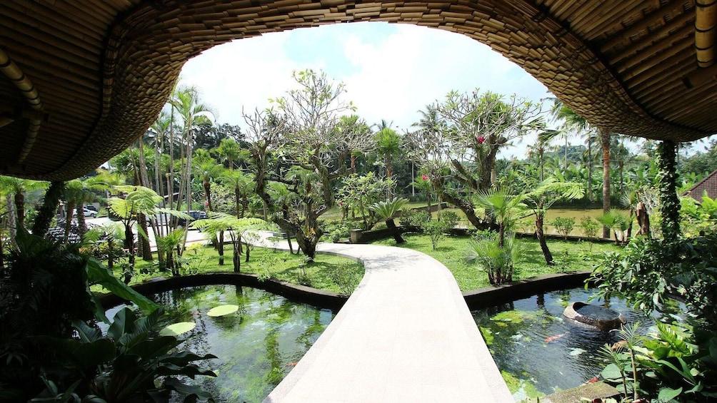 Tampilkan item 5 dari 8. View of pathway through park in Bali