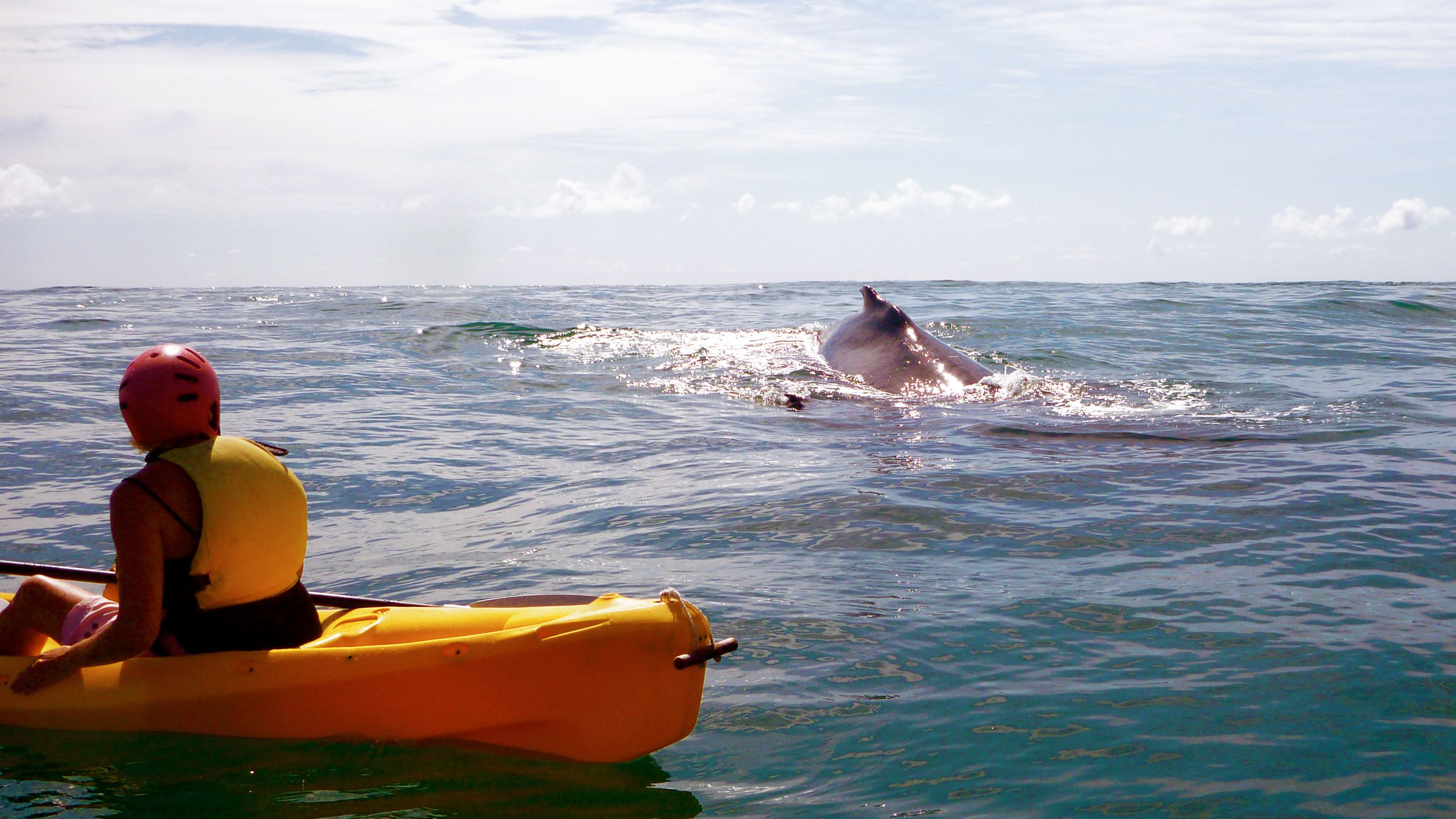 Kayakers on the water near a surfacing dolphin in Byron Bay