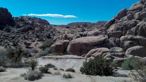 Joshua Tree National Park in Palm Springs