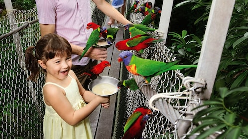 Young girl feeding colorful birds at Jurong Bird Park in Singapore