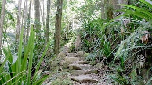 hiking on a rocky mountain path in Australia