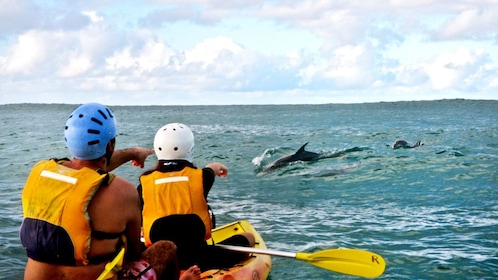 Kayakers spotting a pod of dolphins in the water in Australia