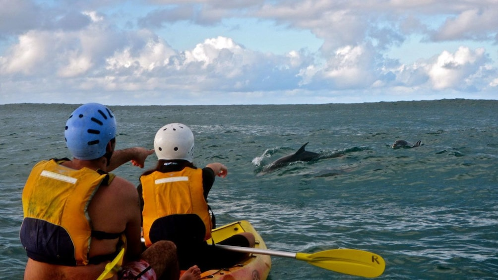 Show item 5 of 5. kayakers spotting dolphins in the water in Australia