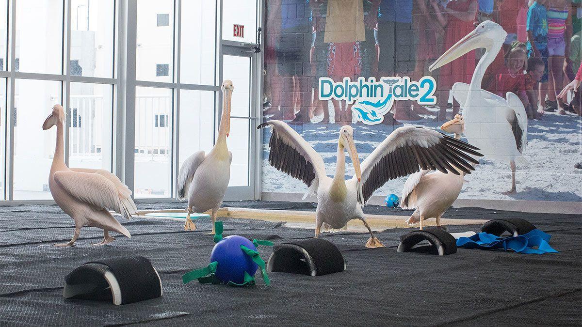 pelican-group-1200-wide.jpg