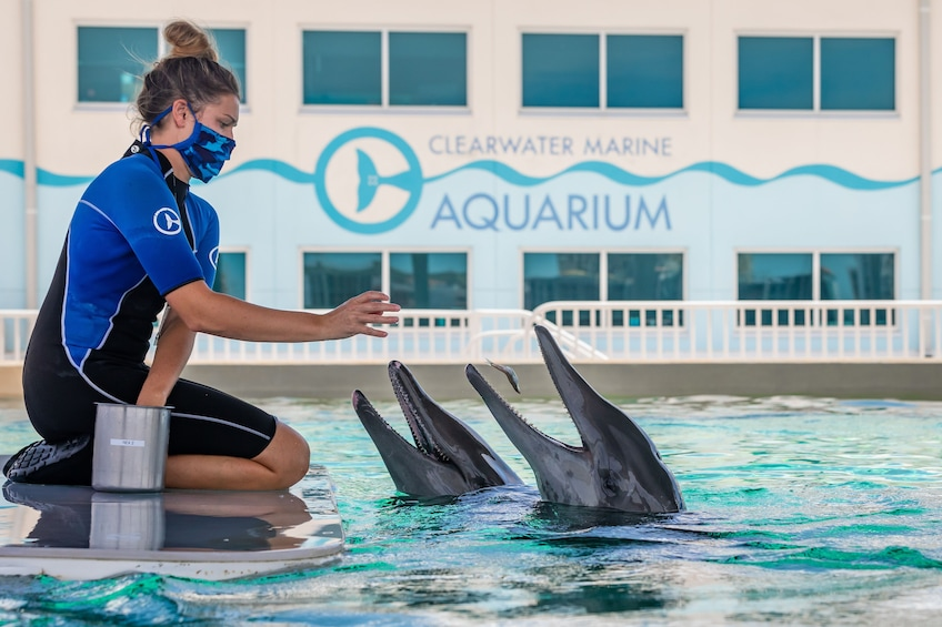 Show item 4 of 10. Clearwater Marine Aquarium - Home of Winter from the Dolphin Tale movies