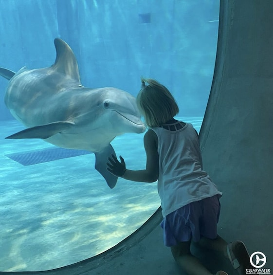 Clearwater Marine Aquarium - Home of Winter from the Dolphin Tale movies