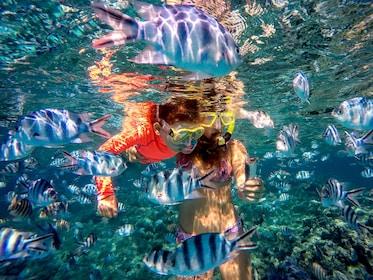 Polynesian Island Half-Day Tour