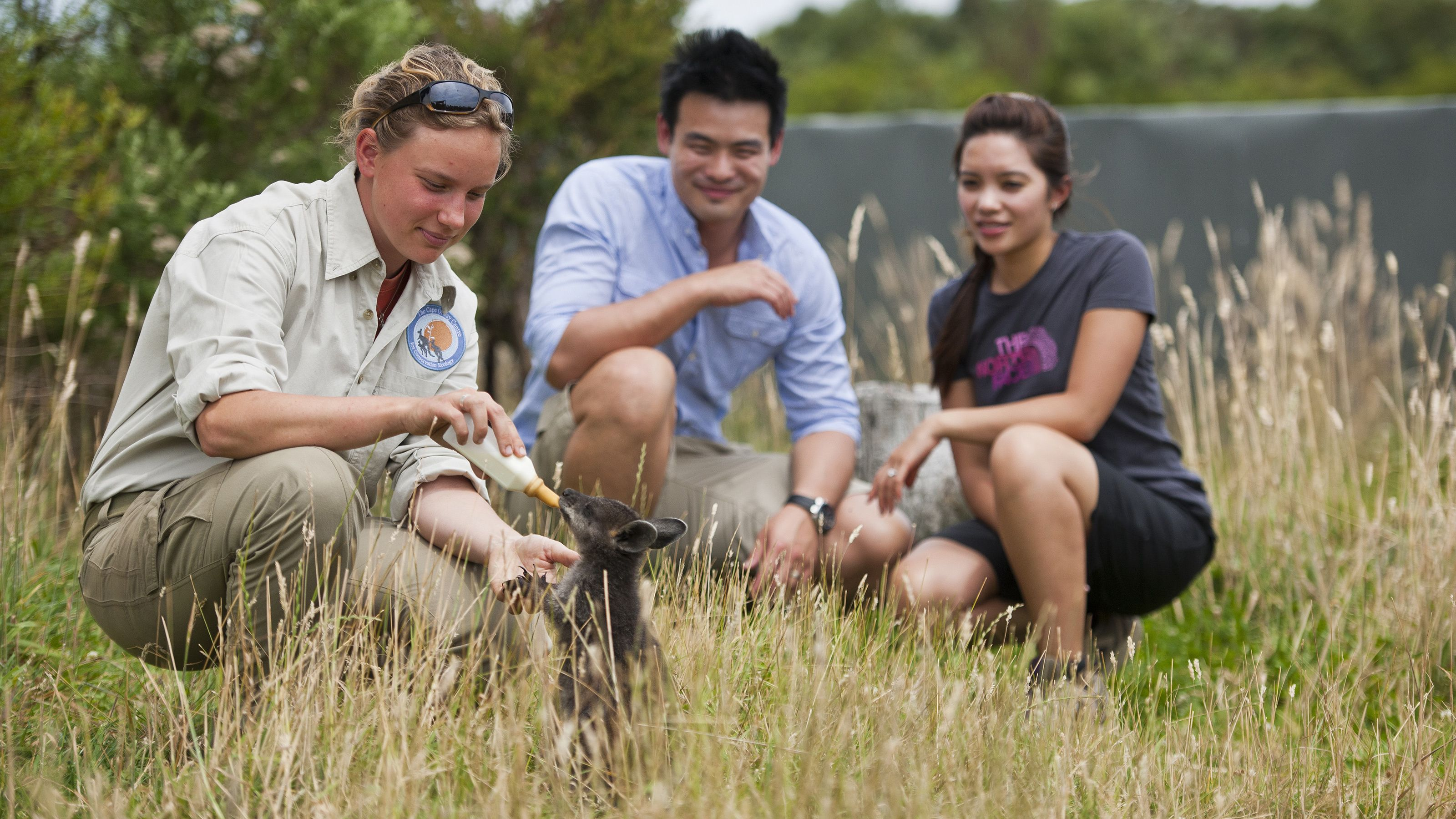 Tour guide and visitors at feeding a wallaby in Melbourne