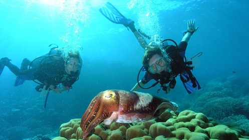snorkelers observing cuttle fish
