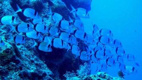 school of small fish