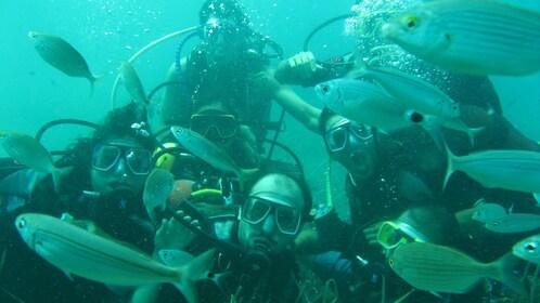 snorkelers among schools of fish