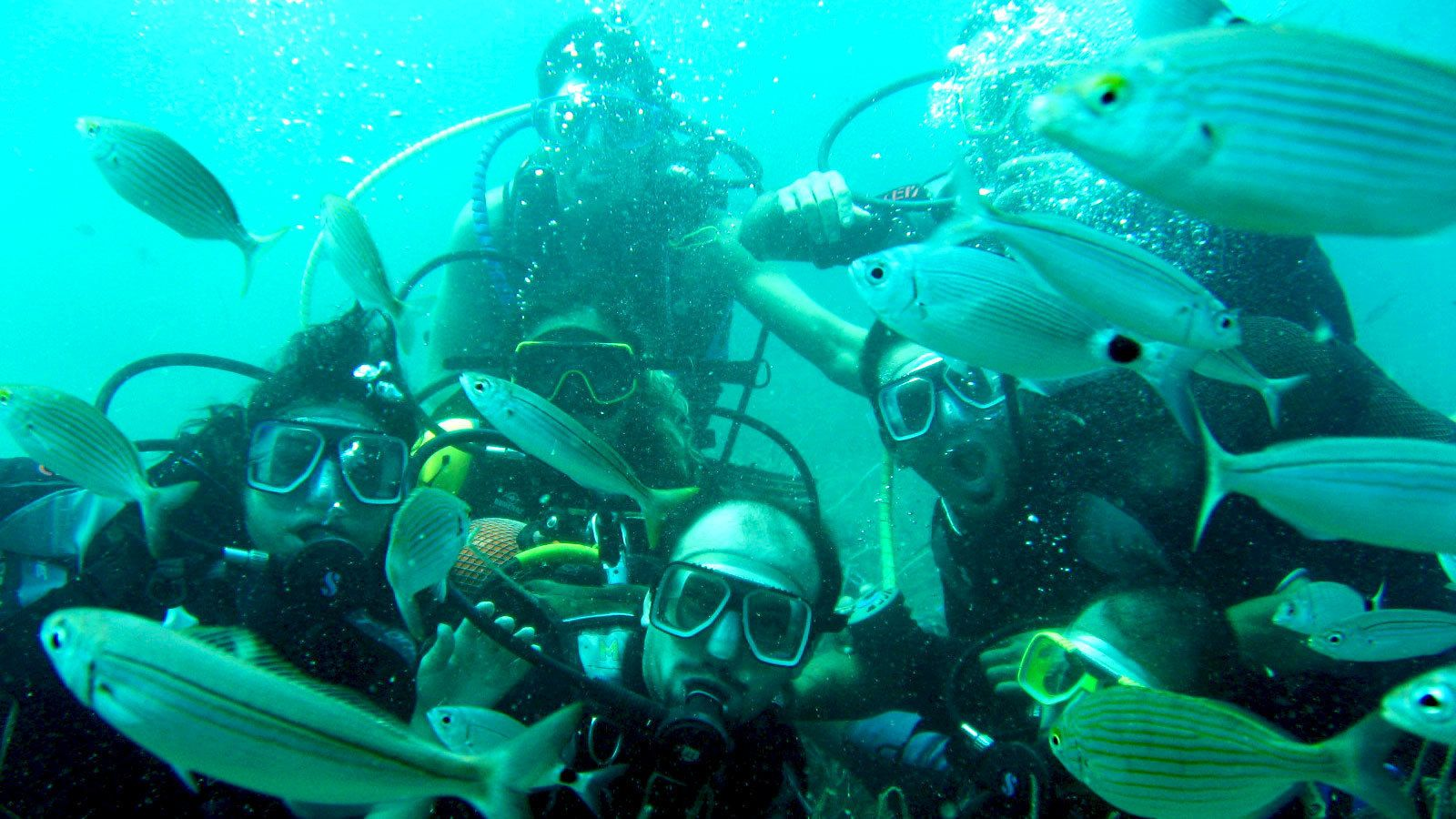 scuba divers surrounded in fish