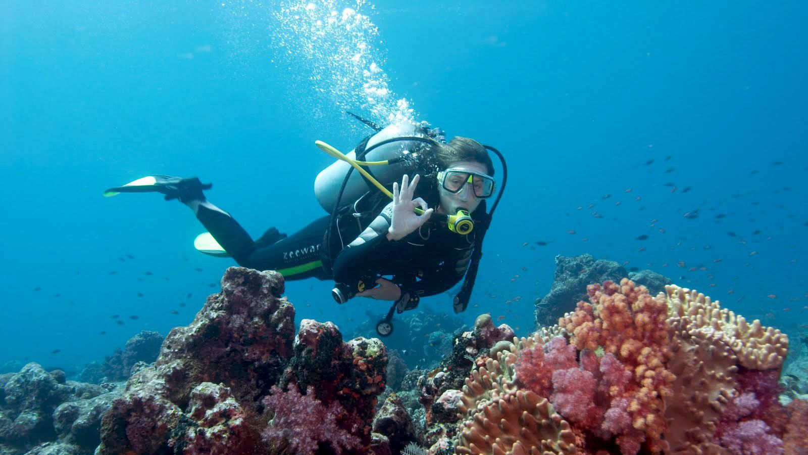 scuba diver by colorful reef