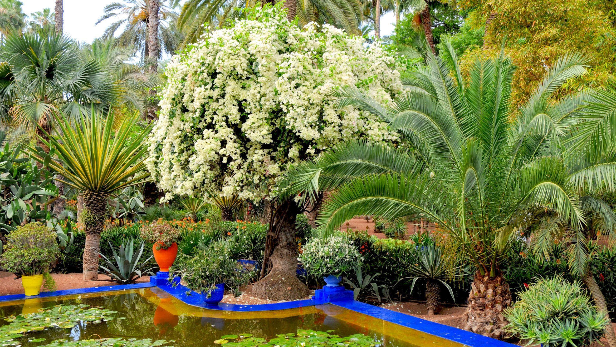 Lush Yves St Laurent's Majorelle Garden in Marrakech