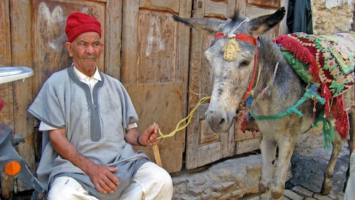 man with a donkey in casablanca