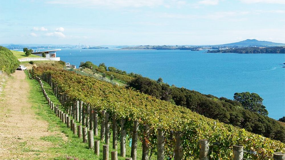 vineyards along the coastline in New Zealand