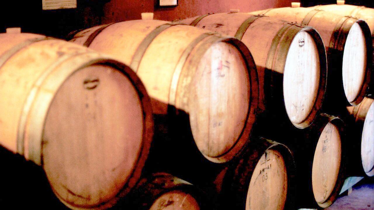 barrels of wine in the cellar in New Zealand