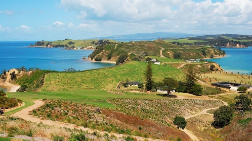 the hilly landscape of Rotoroa Island