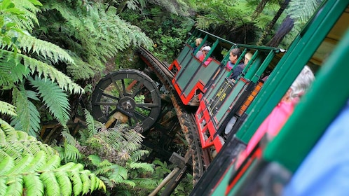 riding a small train in New Zealand