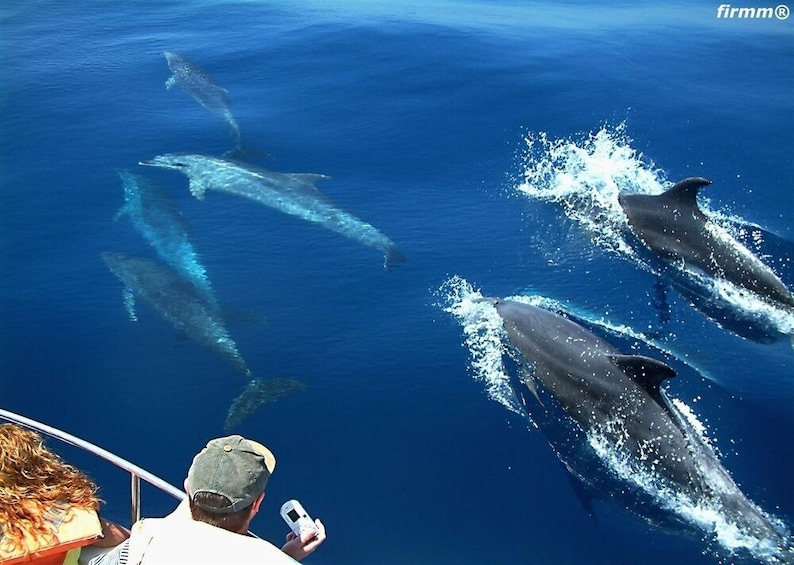 Show item 1 of 1. From Seville: Tarifa Whale Watching Day Trip