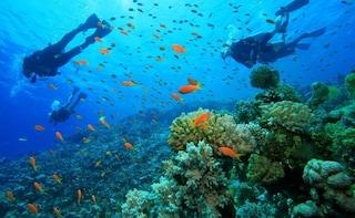 Scuba Diving In Gokarna
