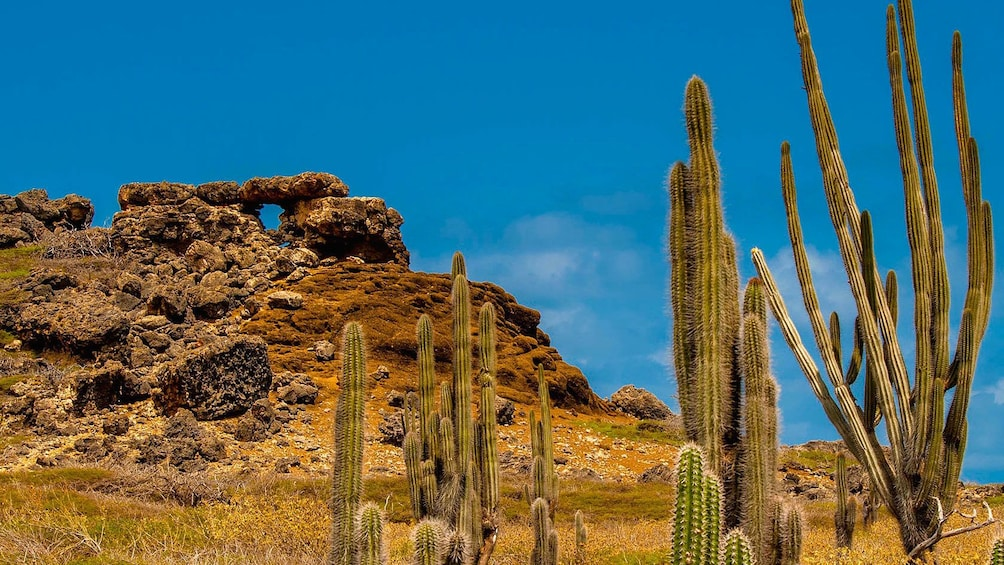 Cactus and rock formations at Bonaire National Park