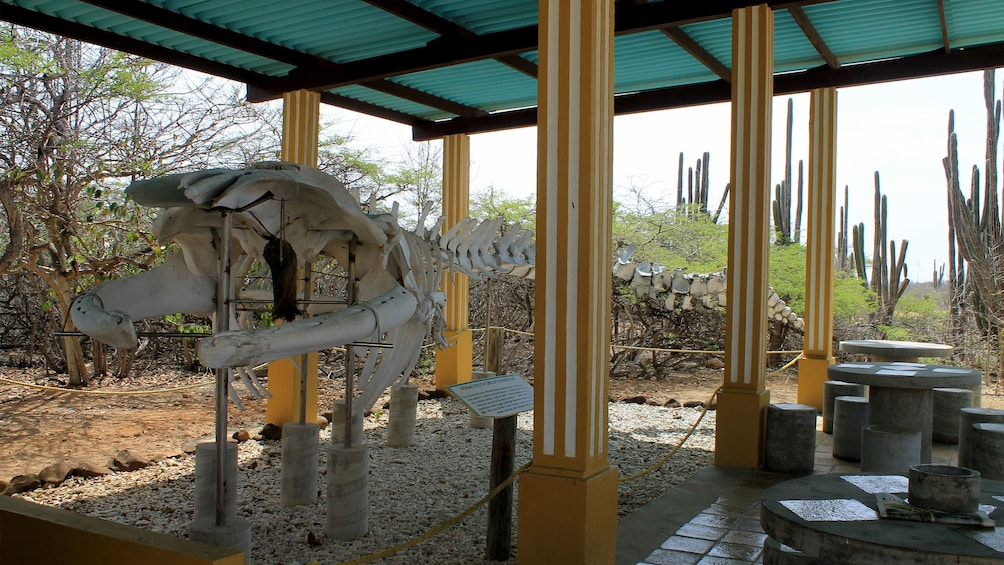 Fossils on display at Bonaire National Park