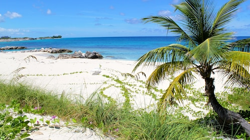 White sand beach and blue water in the Bahamas