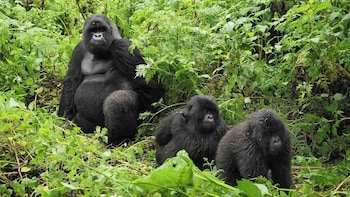 Gorilla Trekking Full Day Tour from Kigali