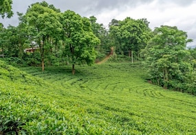 Wayanad Tea Processing And Tasting Experience