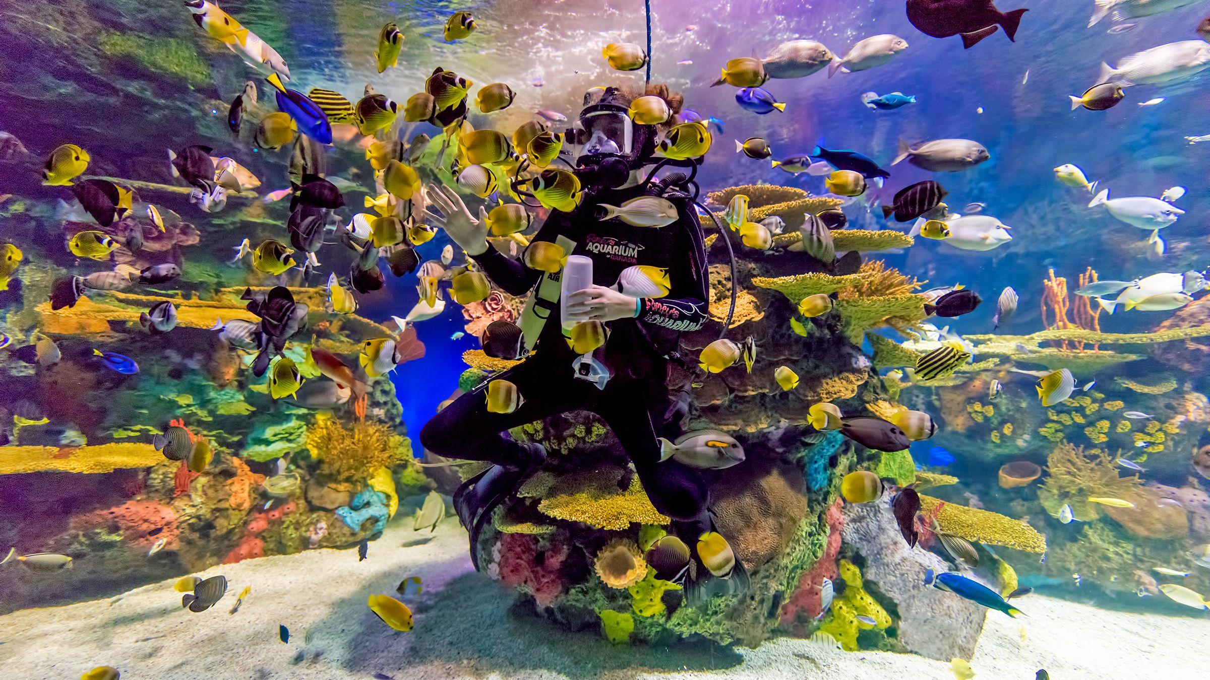 Ripley's Aquarium of Canada Admission Tickets