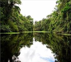 Pacaya Samiria National Reserve 3 Day Tour in Iquitos