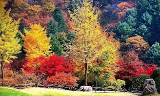 Seoraksan National Park (Namseorak)x Alpaca World 1 Day tour