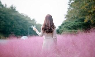 Kochia scoparia x Pink Muhly Grass xDumulmeori half day tour