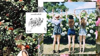 Jeju Camellia Hill Ticket